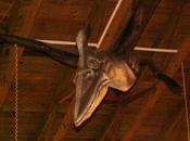 Dinopavilon SOOS 1