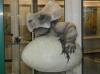 Dinopavilon u přírodní rezervace SOOS