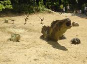 Dinopark Vyškov 3